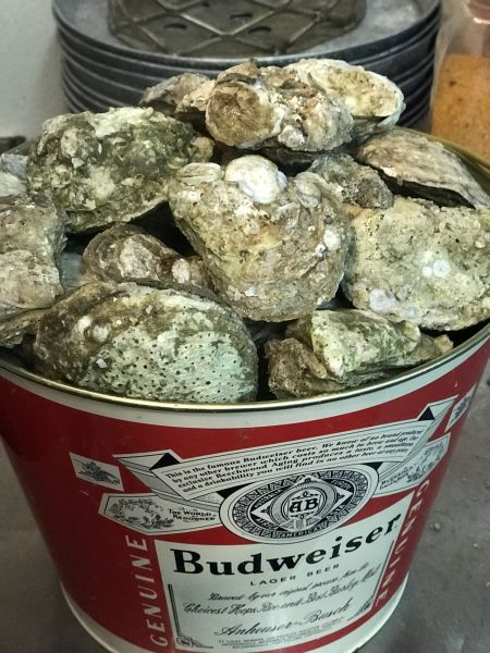 Edenton Bay Oyster Bar in Edenton NC, Oysters (Raw or Steamed)